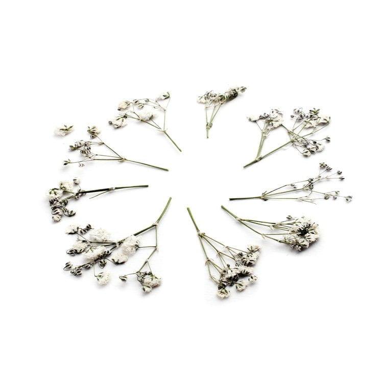 Gypshophilia kasvokukat kasvoille laitettavaksi.